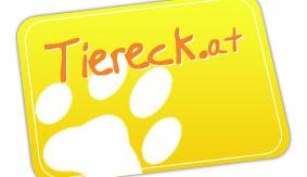 Tierschutz im Lavanttal - Kastrationsprojekte und Aufnahme von Tieren