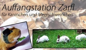 Auffangstation Zarfl